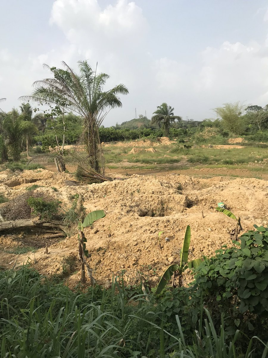 You can also see the devastation of cocoa farmlands by people in pursuit of gold as the lands are dug out for galamsey stuff...