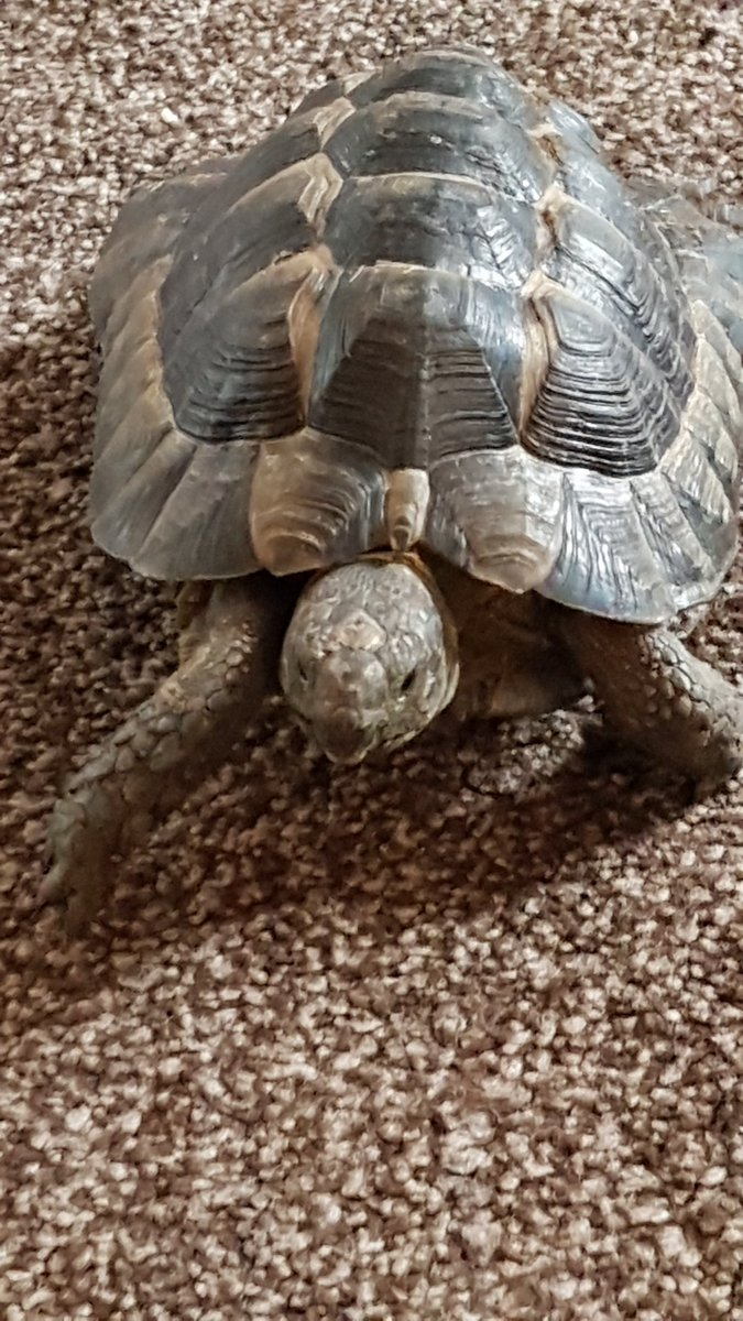 Turters having his daily explore  <br>http://pic.twitter.com/h3msgFrthv