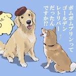 【衝撃】ポムポムプリンは犬だった!! しかも大型犬である!