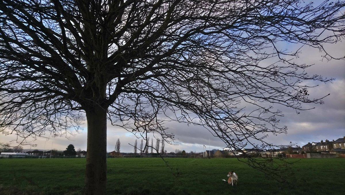 Some nice colours in the sky this morning #dailytree #dailydog #Dewsbury #StormHourpic.twitter.com/WDKidRiQMu
