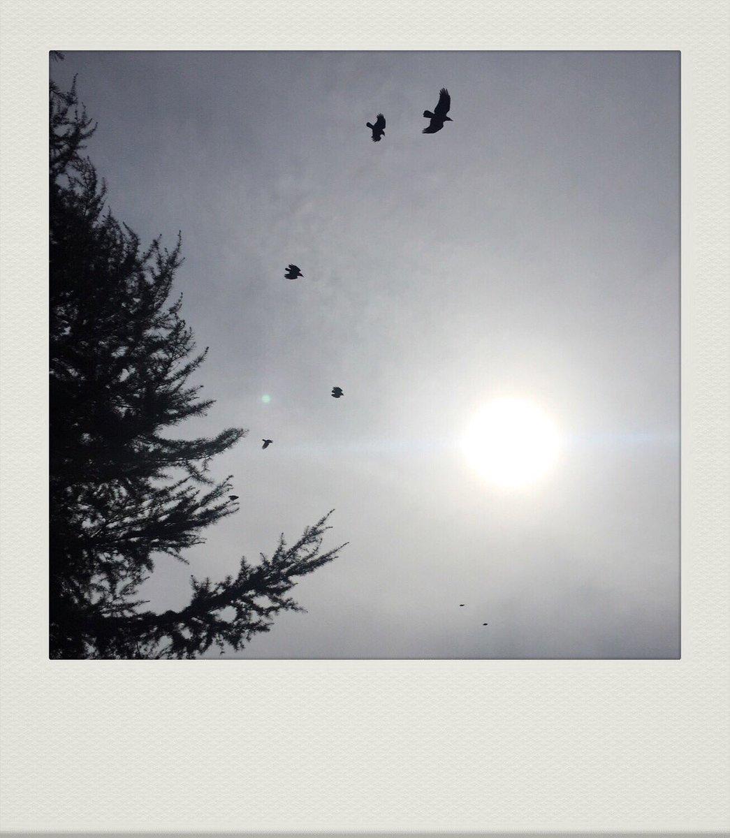 Hava -sanılanın aksine- yoo, yoo gayet güzeldi çünkü kuşlar uçuyordu. 🦅 #air #breathe #moment #now #catchthemoment #şimdi #an #istanbul #birds #sun #wintersun #kışgüneşi #tarkan #7 #7birds