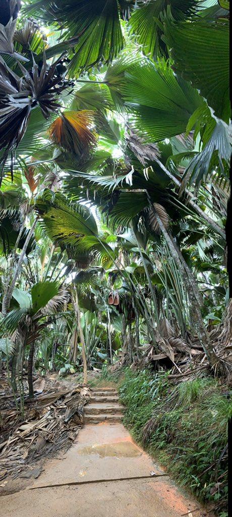 Praslin Island dense palm jungle here on Seychelles. It's pretty amazing!  @zegrahm https://t.co/jTsn9yLTHn