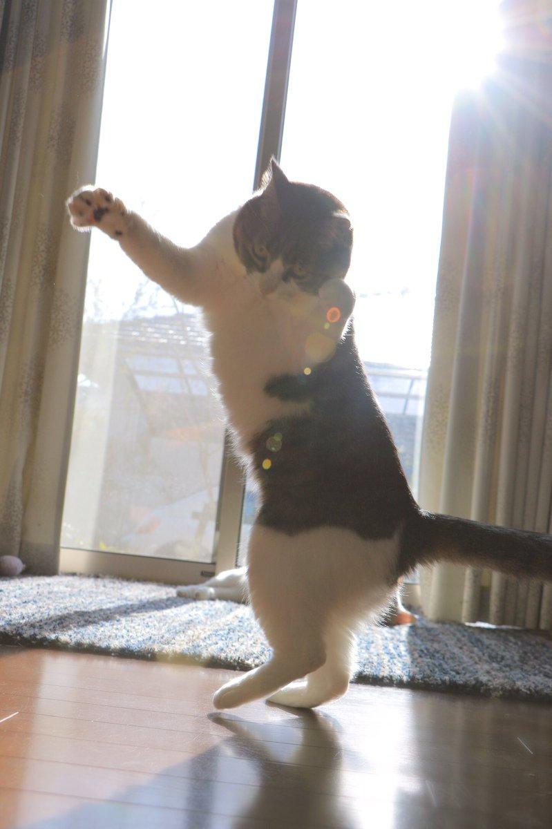 圧倒的迫力の我が家の姫猫👸ご覧ください!