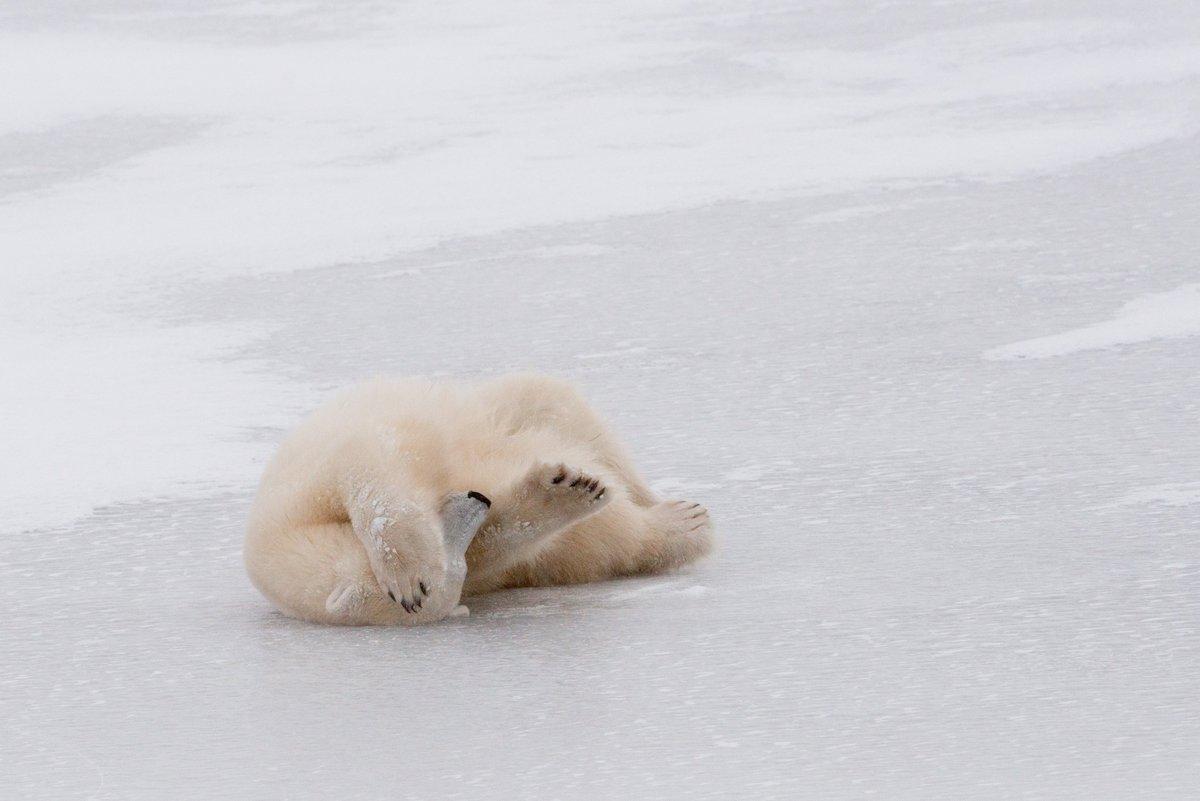 #polarbearday