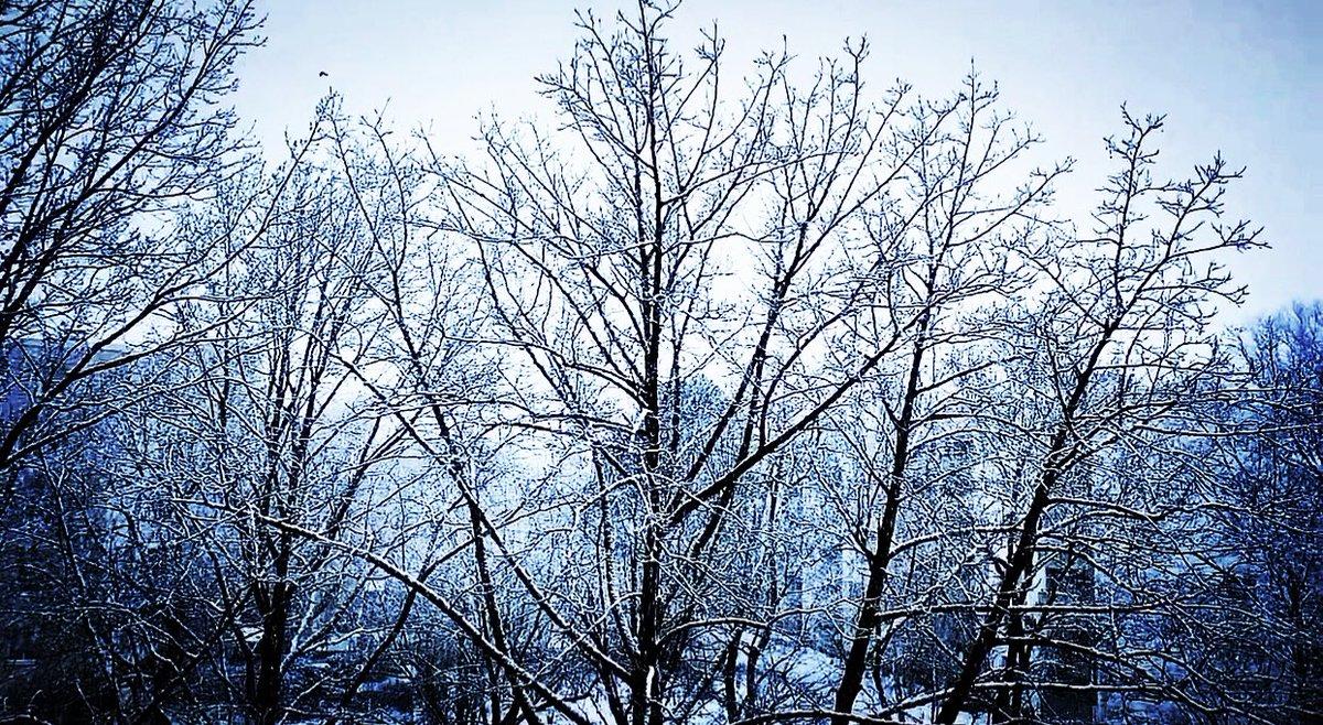 #WinterWonderland #schnee #snow #winter #frankfurtammain #frankfurtpic.twitter.com/iHtsACFz1Z