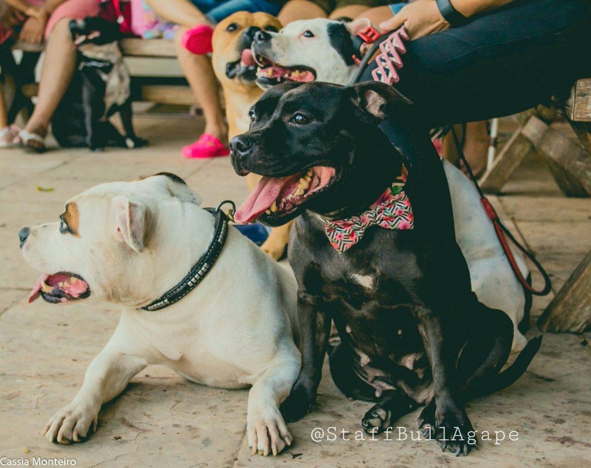 Acesse nosso sitehttp://www.canilstaffbullagape.com.br  #staffbullagape #staffyworld #pet #staffordshirebullterrier #staffbull #nannydog #dog #staffie #instapet #canilstaffbullagapepic.twitter.com/MqtJdITeKR