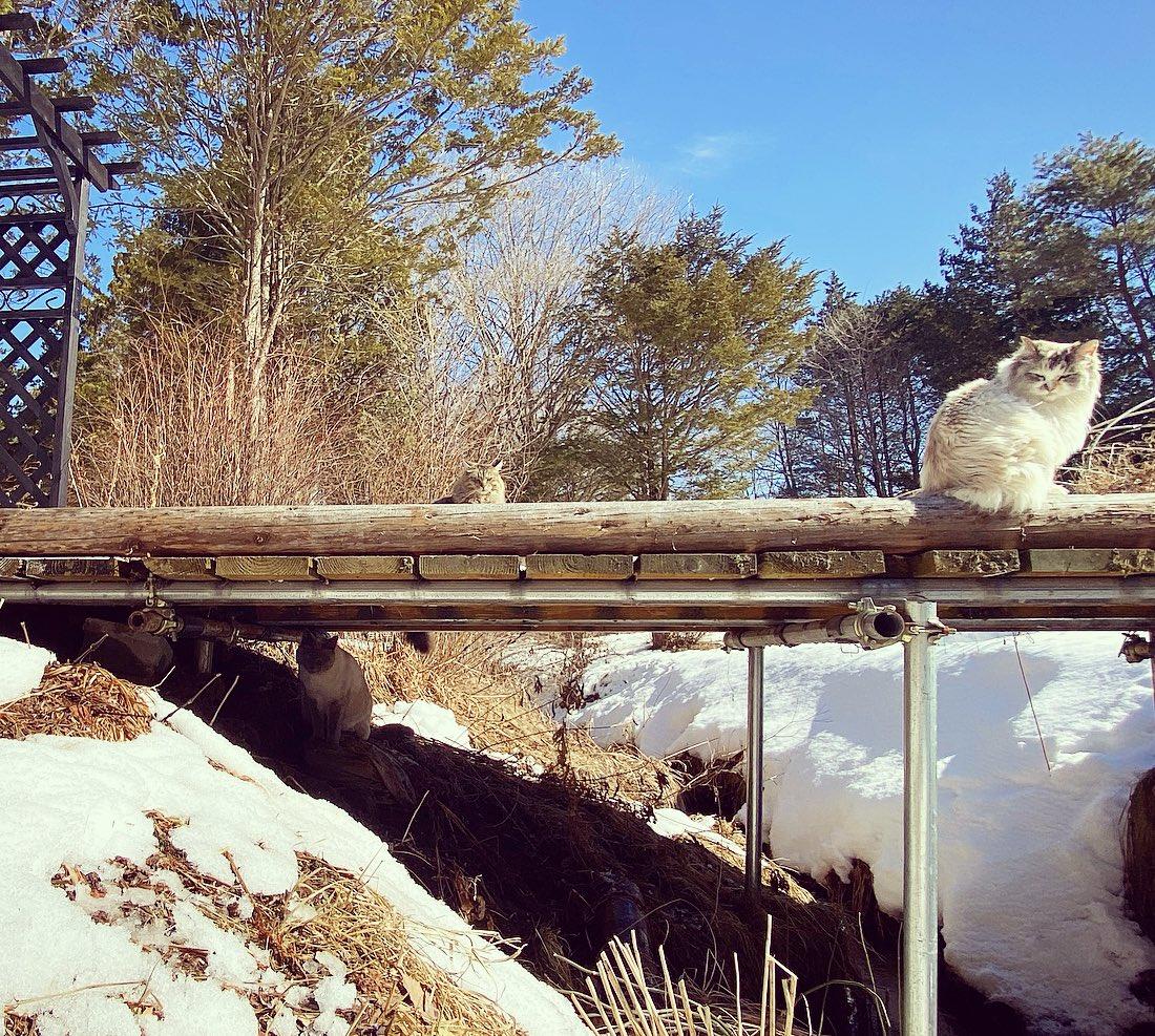 実は橋の下にいたいっぴき。かくれんぼしたり日向ぼっこしたり。ひとの世界はいろいろ大変だけど、猫たちとお庭の景色はいつも通り。