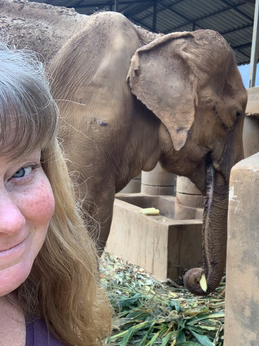 Just here helping get some good fruit and veg to the oldest elephant in the world, Yai Bua. (104!) She deserves the absolute best care possible! #elephant #elephantsanctuary #noivory #noriding #nochains #thailand #chiangmai #travel #volunteer #sunkissed #nomakeup #badhairpic.twitter.com/zXlSA4RcBE – at Elephant Nature Park