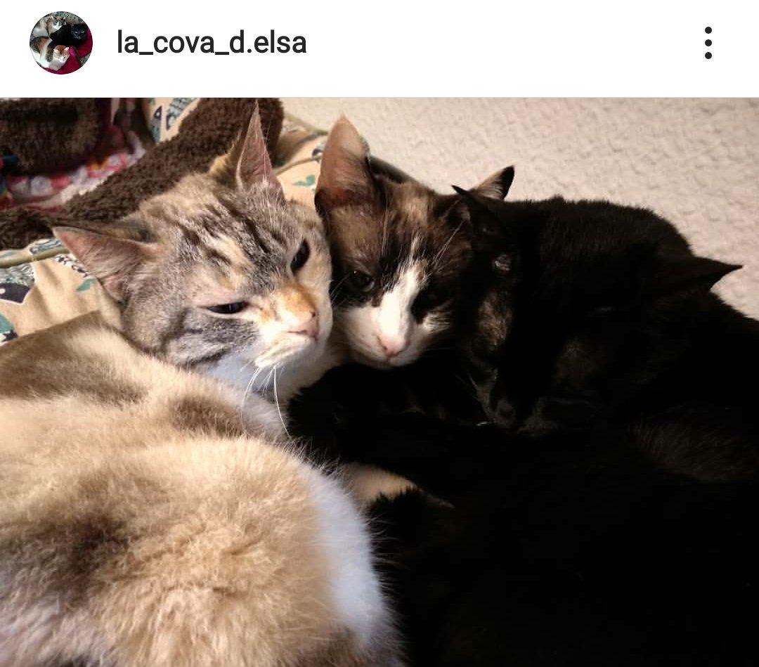 """Ya conoces nuestra casa de acogida más instagramer???   Sígue a """"La Cova de Elsa""""  en #Instagram y conoce a los gatetes acogidos y sus aventuras felinas:  https://www.instagram.com/la_cova_d.elsa/?hl=es…pic.twitter.com/fSvunOKcPx"""