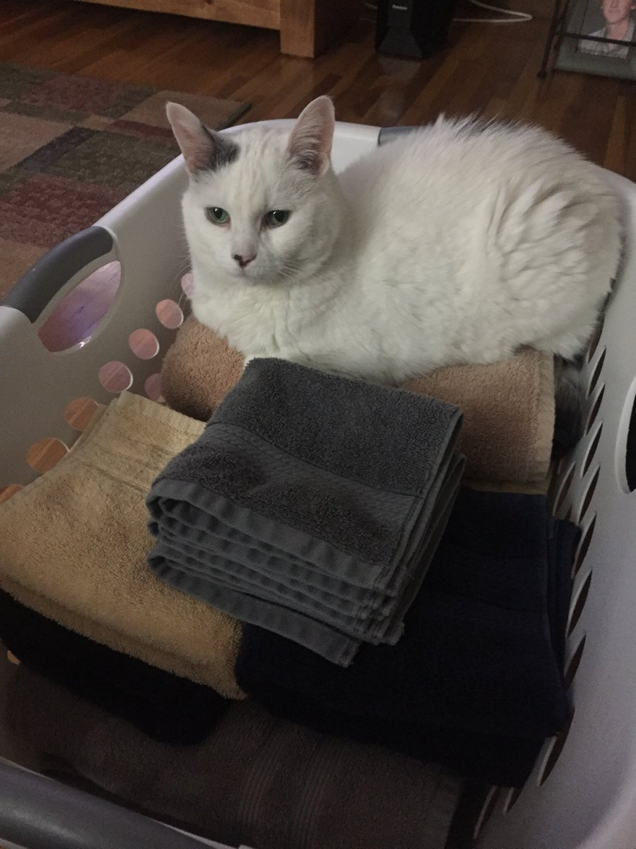 #mymorning Fella says I folded the towels all by myself 😻