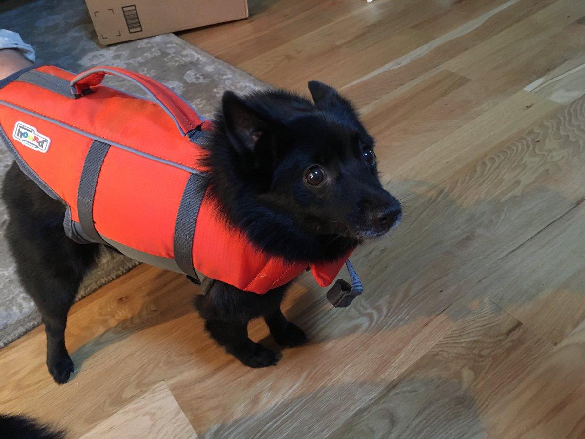 #mymorning Neko terrified of her life jacket.