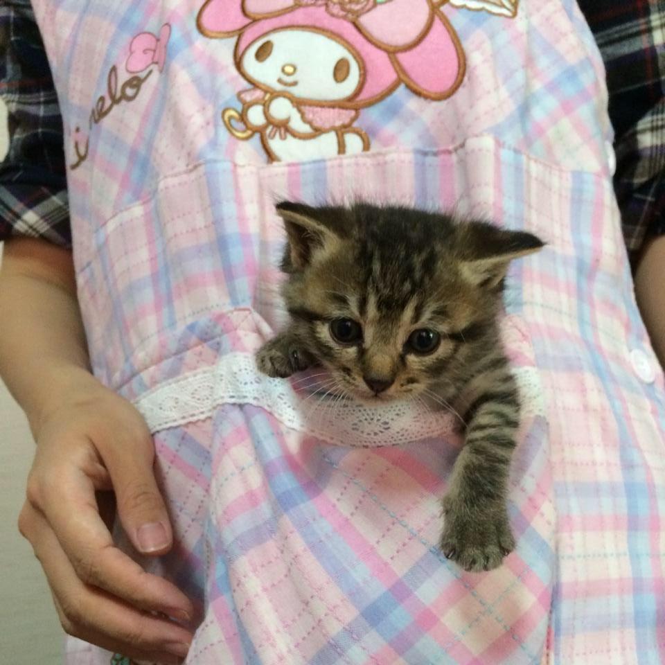 @animalland7 FF外から失礼します。私も猫踏んじゃった😱しないように、朝の忙しい時はずっとエプロンに入れていました🤣笑