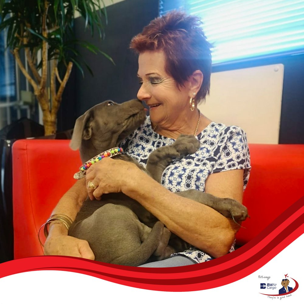 When Ben landed in Cape Town earlier today, he greeted his new mommy with lots of love and sloppy kisses. 🐾 #PetLounge #AnimalTravel #instapaws #petlovers #loveforpets #animaltransportation #animals #petsofinstagram #pets https://t.co/Jxa83tGlHV