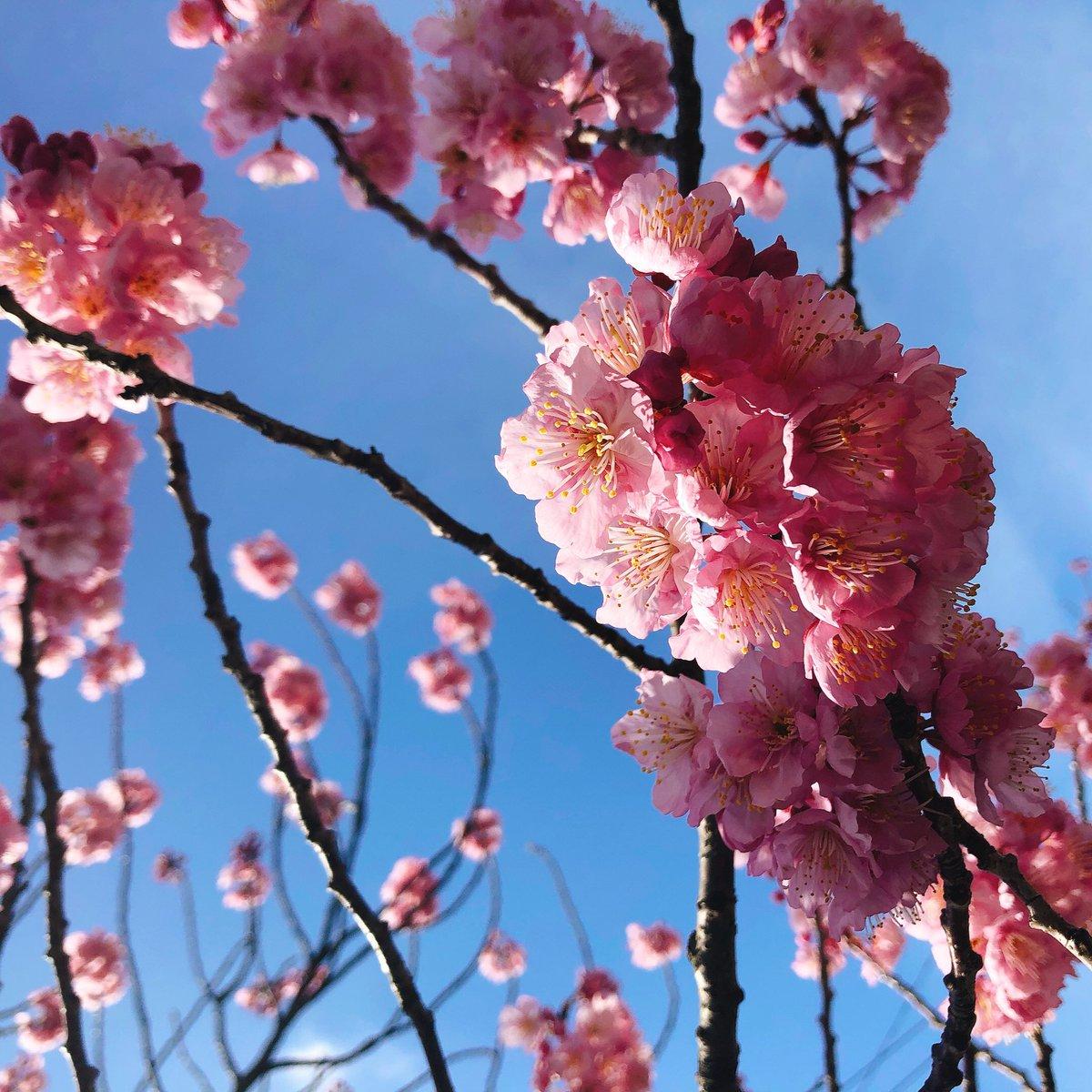 凱旋7日目終えました!ありがとうございました!!写真を全然撮らなかったので…休演日に散歩した時の写真を🎈綺麗に咲いていました☺️#エーステ#秋単独