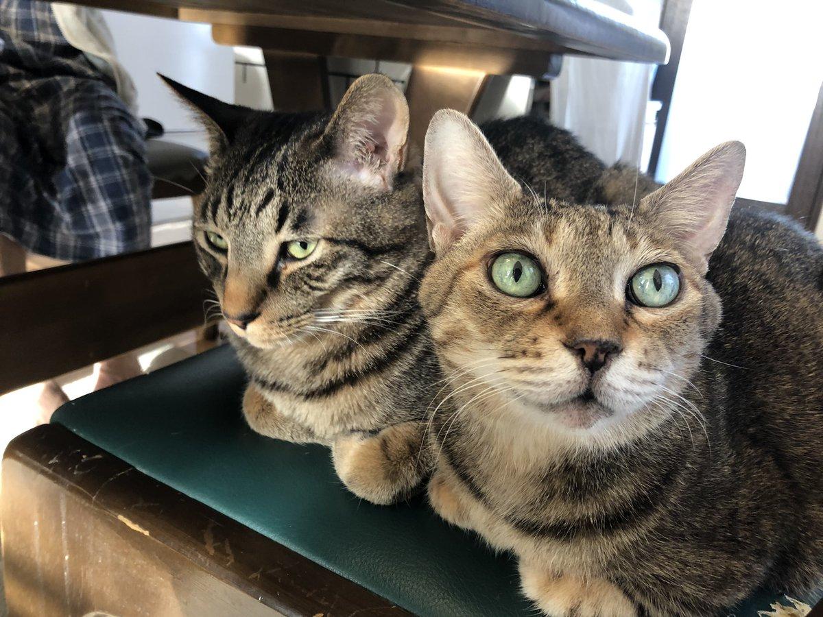 なんか真面目なこと言ってしまったので猫が全て解決してくれる
