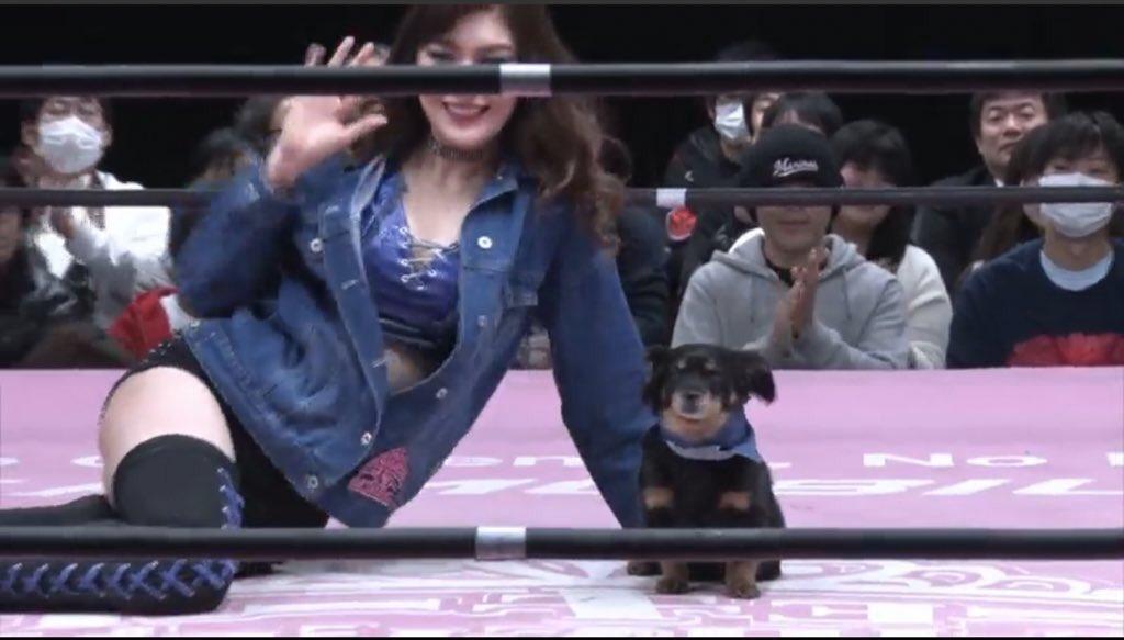 今、人間界が危ないらしい。東京女子の試合も中止になった…俺は昔、ゆきに命を救われた。その後東京女子の皆とも出会い俺の犬生に楽しさや刺激も与えてくれた。義理犬情。俺にしか出来ない事本気出して考える。ただの中年雑種とか言わせねぇからな🐾🦴#ザクランド
