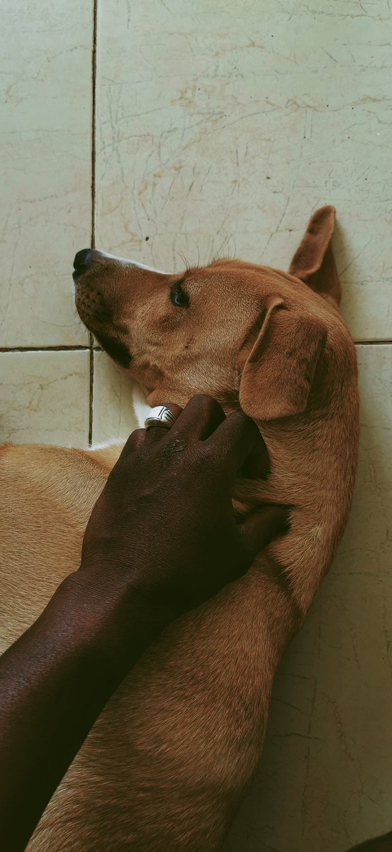 Animals are such agreeable friends - they ask no questions; they pass no criticisms. #vsco