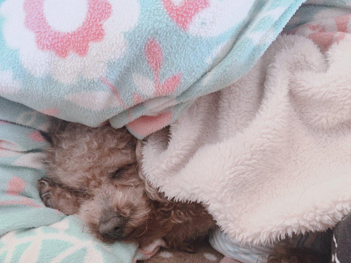 おやぱんココ自分の手枕にしてるのきゃわちい