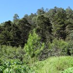 Image for the Tweet beginning: Con un importante recurso forestal,