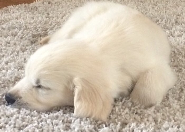 Nothing to see here - just a baby polar bear sleeping on a rug  #InternationalPolarBearDay <br>http://pic.twitter.com/B94PMnjMWN