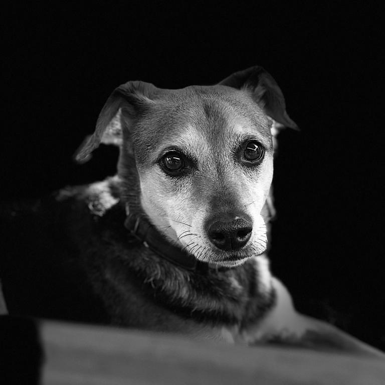 Mein Süße Lakina #hundeleben #Hundefotografie #excellent_dogs #hundeblog #meowsandwoofs #petfluencer #meinhund #lieblingshund #hundeliebe #barkhappy #adogslife #puplifepic.twitter.com/OueWpQjKdM