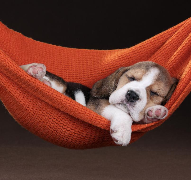 Relaxing is my favorite sport   . . . . . #puppyeyes #dogsoflove #dogofworld #puppies_of_instagram #doggiesofinstagram  #hikingdog #traildog #traildogs #greatoutdogs #adventurepup #backcountrypaws #beaglepuppies #beaglegang #beaglegram #beaglelover #beaglepuppic.twitter.com/hpyX1Mpy0u