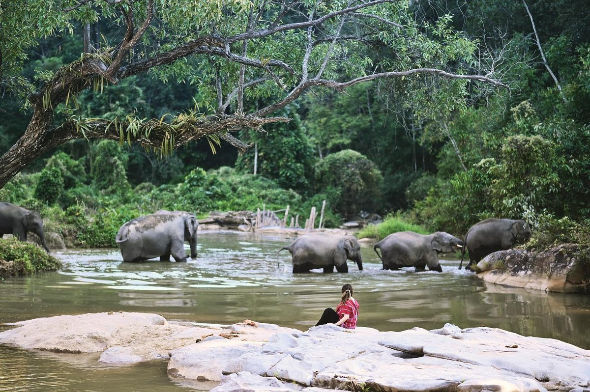 Today is National Thai Elephant Day.  This annual celebration promotes awareness about protecting and conserving the Thai elephant population and its habitats.  https://www.pm-tours.com/pm-tours-blog/elephants-in-thailand…  #thaielephantday #elephantsanctuary #chiangmai #elephants #pmtourschiangmaipic.twitter.com/n00x6CoDI4