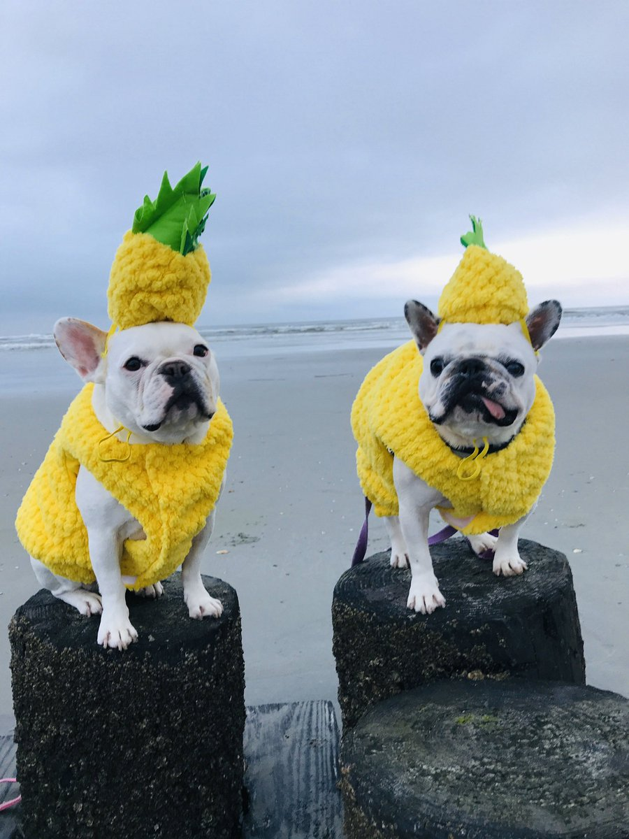 Be a pineapple: stand tall, wear a crown, and be sweet on the inside.   Don't forget to vote for Luna Bean (pictured here with Emmy Rose, her BIGGEST cheerleader) in the Crown Dog of Charleston contest! Link in bio or type https://t.co/5WGlvgyZQI  #crowndogofcharleston https://t.co/zaXaIa1IJv