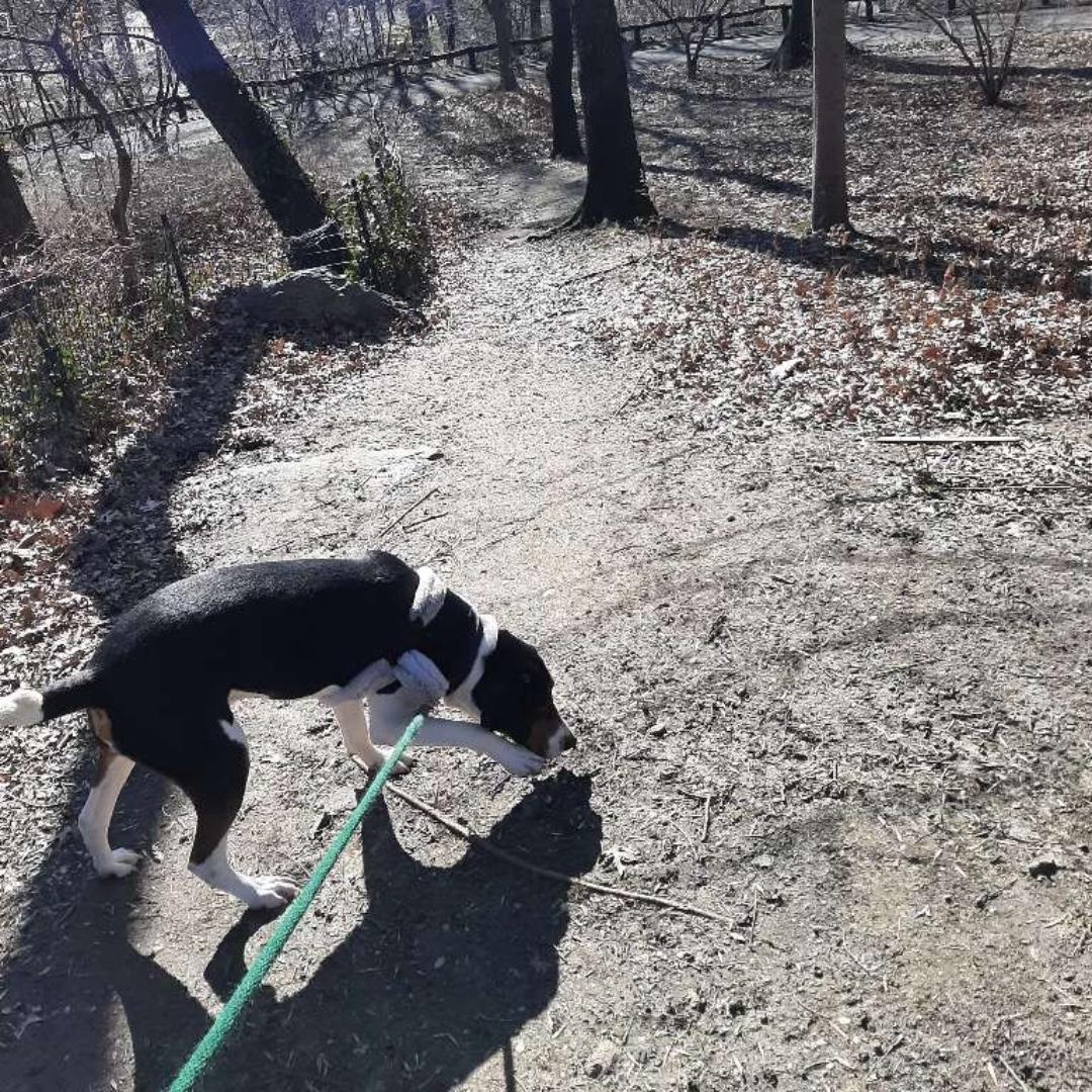 Gibson wishes you a happy end of the day! #hounddog #maythepawsbewithyou #lukedogwalker #dogwalkeruws #happydog #uws #doggy #doggo #furbaby #dogcity  #puppy #puppylover #ilovedogs #sweet #whatabeauty #nycitydog #sweetdoggo #endoftheday #cutedog #cutepic #dogsofinstagram