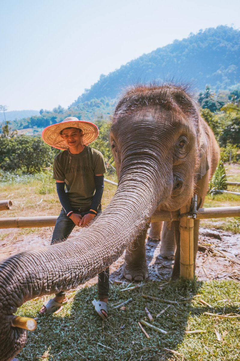Here's an elephant wearing a hat to brighten up your day #elephantsanctuary pic.twitter.com/3Zp1Q58ILd