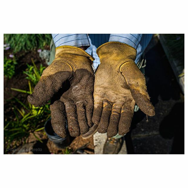 Whenever I am photographing an artist, an athlete, musician or craftsman I always photograph their hands. They can be as revealing and as expressive a face. #hands #gardener #gloves #streetportrait #streetphotography #sanmarino #x100f #fujifilm @thehunti… https://ift.tt/33aR0y9 pic.twitter.com/WMCS6Y8GZM