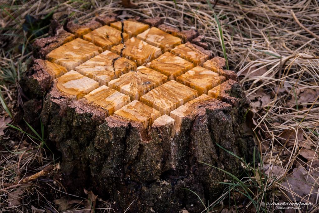 Gratis natuurvriendelijke taart bij de #Tenellaplas. Met wat hulp is deze eerder gevelde boom nu een geweldige plek voor insecten en... vogels. Gezien?.  Photo: @About_Pixels / #duinen #wandelen #gratis @OpVoornePutten #Tenelleplas #Rockanje