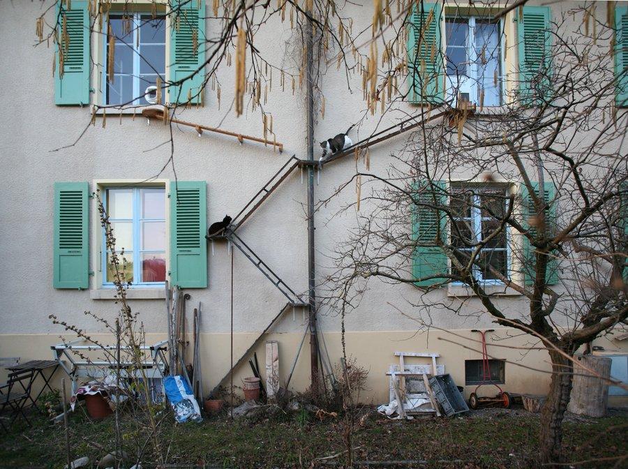 It feels like a good time to revisit the cat ladders of Switzerland. brigitteschuster.com/swiss-cat-ladd…