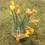 Image for the Tweet beginning: More change for the daffodils