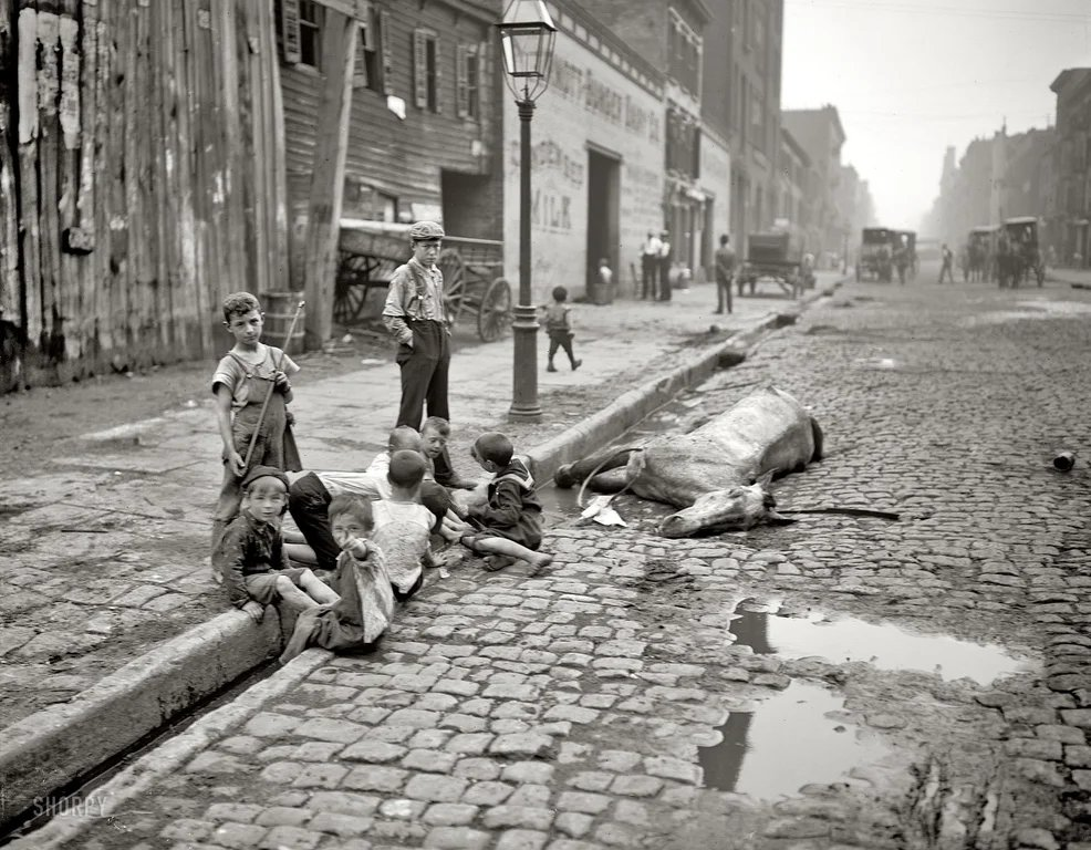 New York City, 1900. Yes, that's a dead horse.