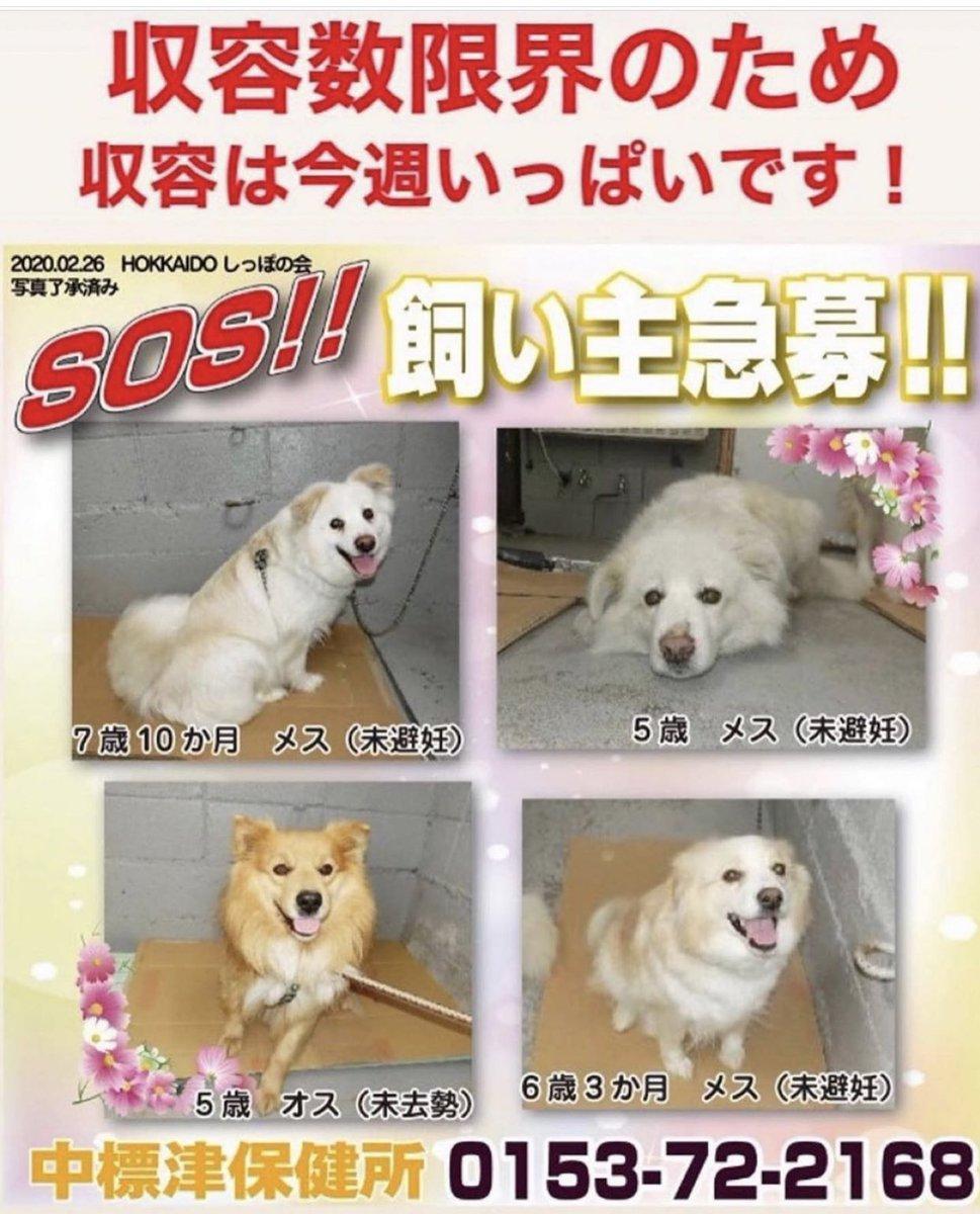 里親 札幌 犬