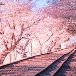 桜写真や絵でタイムラインに花を咲かせてみませんか?家に閉じこもりっきりで滅入る気持ちを少しでも楽に!