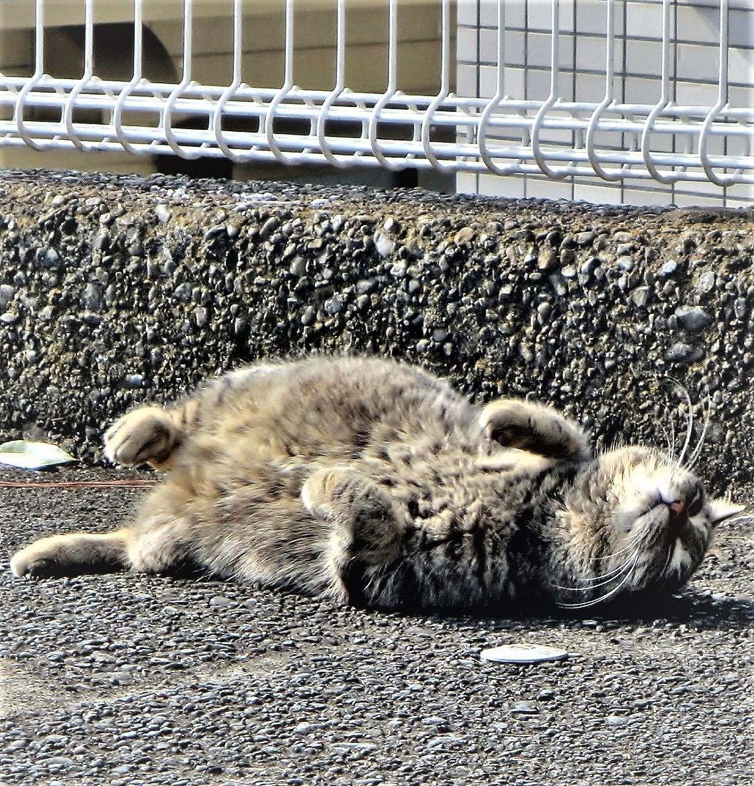おはよ~ ございます ★╦╦╔╗╔╗╔╗╗╔░╔╦╗╔╗╔╗─╦╔╗╗╔★  ★╠╣╠╣╠╝╠╝╚╣░║║║║║║║╔╣╠╣╚╣★ ★╩╩╩╩╩─╩─╚╝░╝╝╝╚╝╩║╚╝╩║═╝★ 写真2014年3月の加藤虎之娘(トラノコ)です。 #cat #ねこ #猫 #地域猫 #東京探検隊 pic.twitter.com/msxeYQdQwB