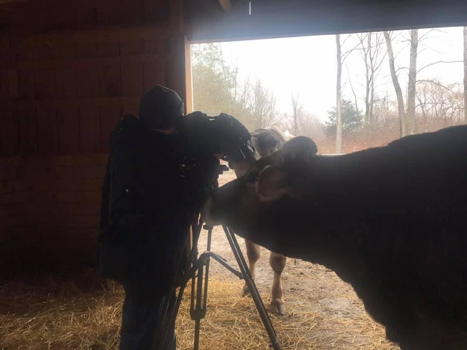 Look, my mom and all of us were featured on a news station! This is awesome!! https://www.wgrz.com/mobile/article/sports/outdoors/ashasfarmsanctuaryrescuesanimalsthatotherwisewouldsufferahorriblefate/71-8f09cb2f-6929-434a-8a37-16fa703ca243… #ashasanctuary #albertthesupercow #WGRZ #buffalo @wgrztvpic.twitter.com/0ym6nrwnFX