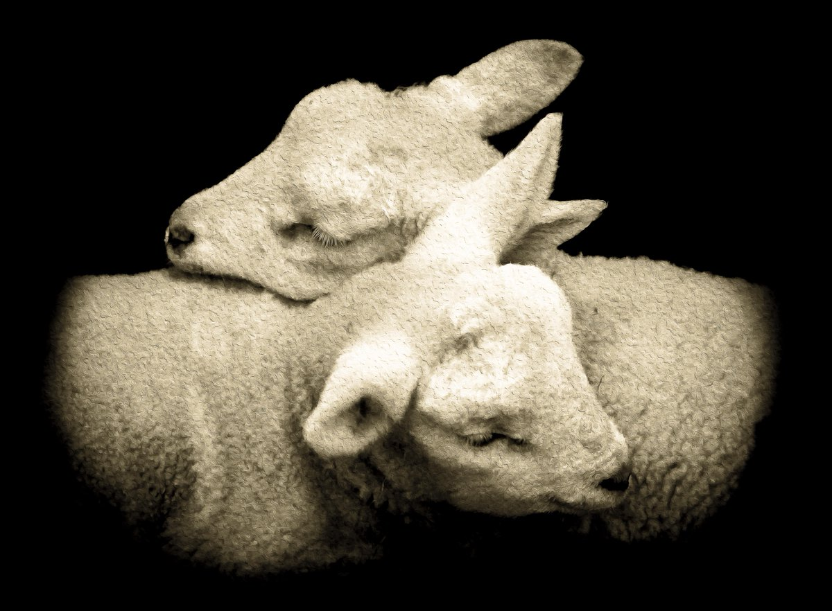 March already, and more lambs today. Original photo taken at the wonderful sanctuary that is Goatacre.
