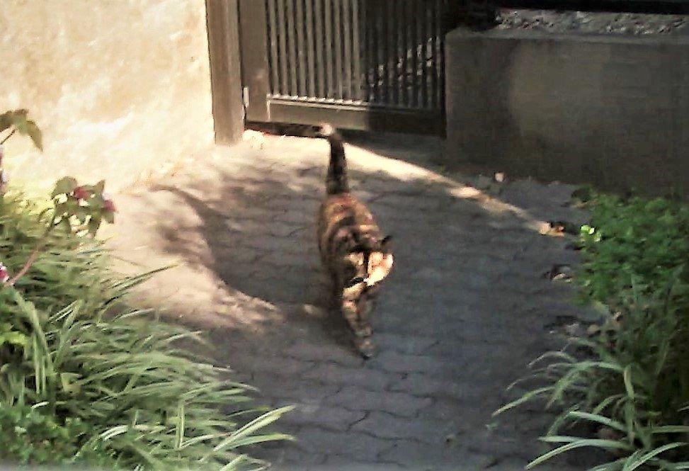 こんばんは~ ヾ(ó㉨ò)ノ ヾ(*ΦωΦ)ノ ちょうど一週間前の2月24日に「鼻風邪」を引き 安静にして治りそうだったのに 今日午後の買い物から帰宅のあとの 鼻水が止まらない。兎に角大量の鼻水だ。 ヤレヤレ #cat #ねこ #猫 #地域猫 #東京探検隊 pic.twitter.com/f6cwNvIrq2