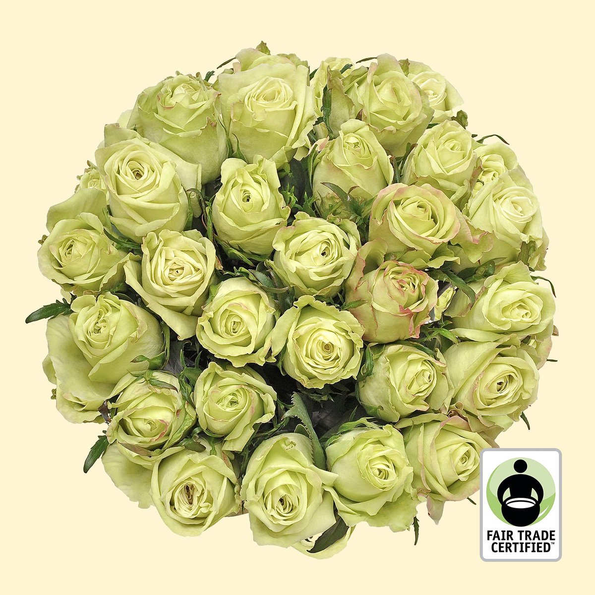 We're loving our Fair Trade Green roses, perfect for St. Patrick's Day!   http://bit.ly/fairtradegreenroses…  #bloomingmore #greenroses #roses #fairtrade #florallove #seasonalfloweralliance #floralfix #floweraddict #moodforfloral #flowerstalking #florallife #flowersoftheworldpic.twitter.com/tbLgZdOCeE