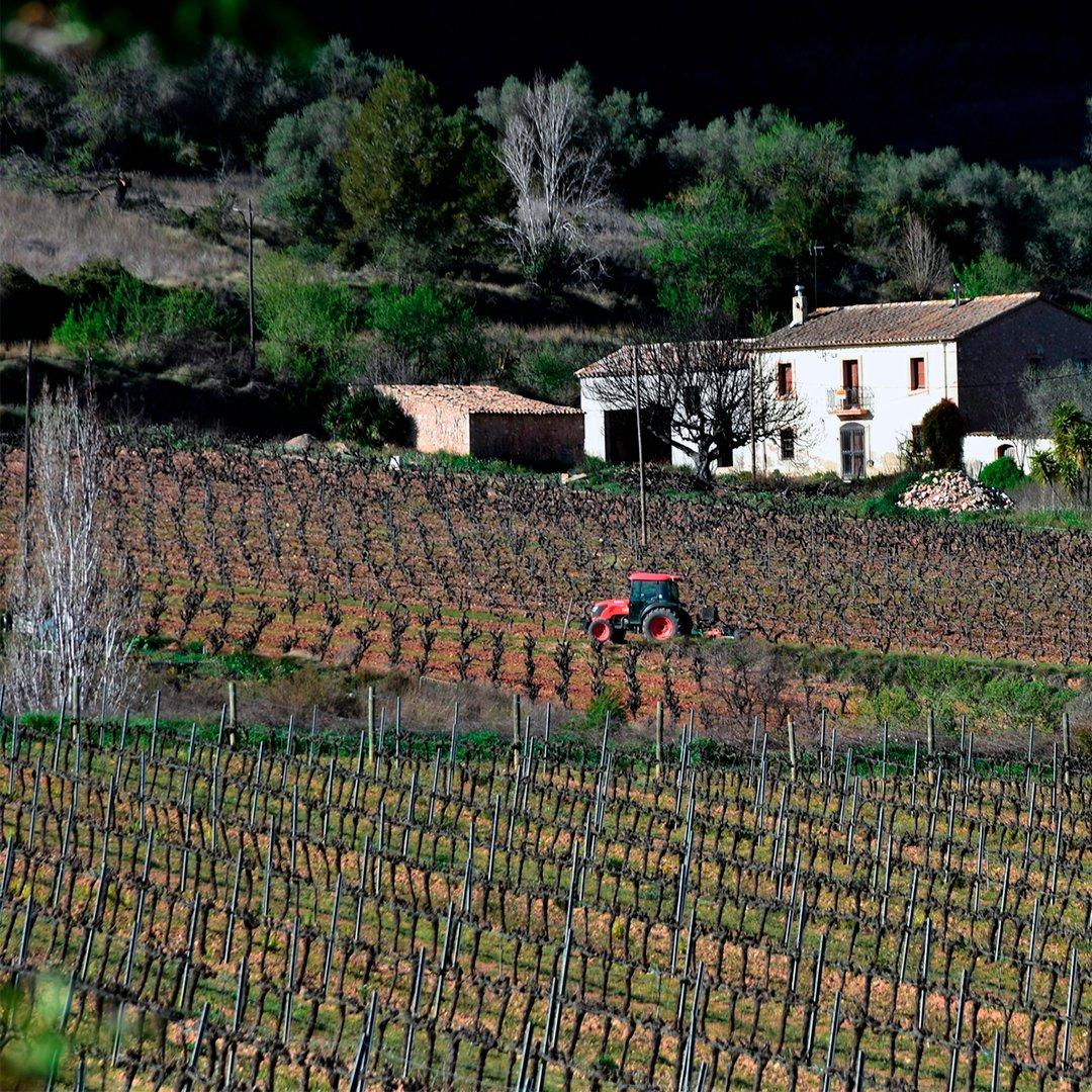 Labrando de sueños la tierra. 📷 @ngelaLlopFarr maset.com/es/blog/escuel…