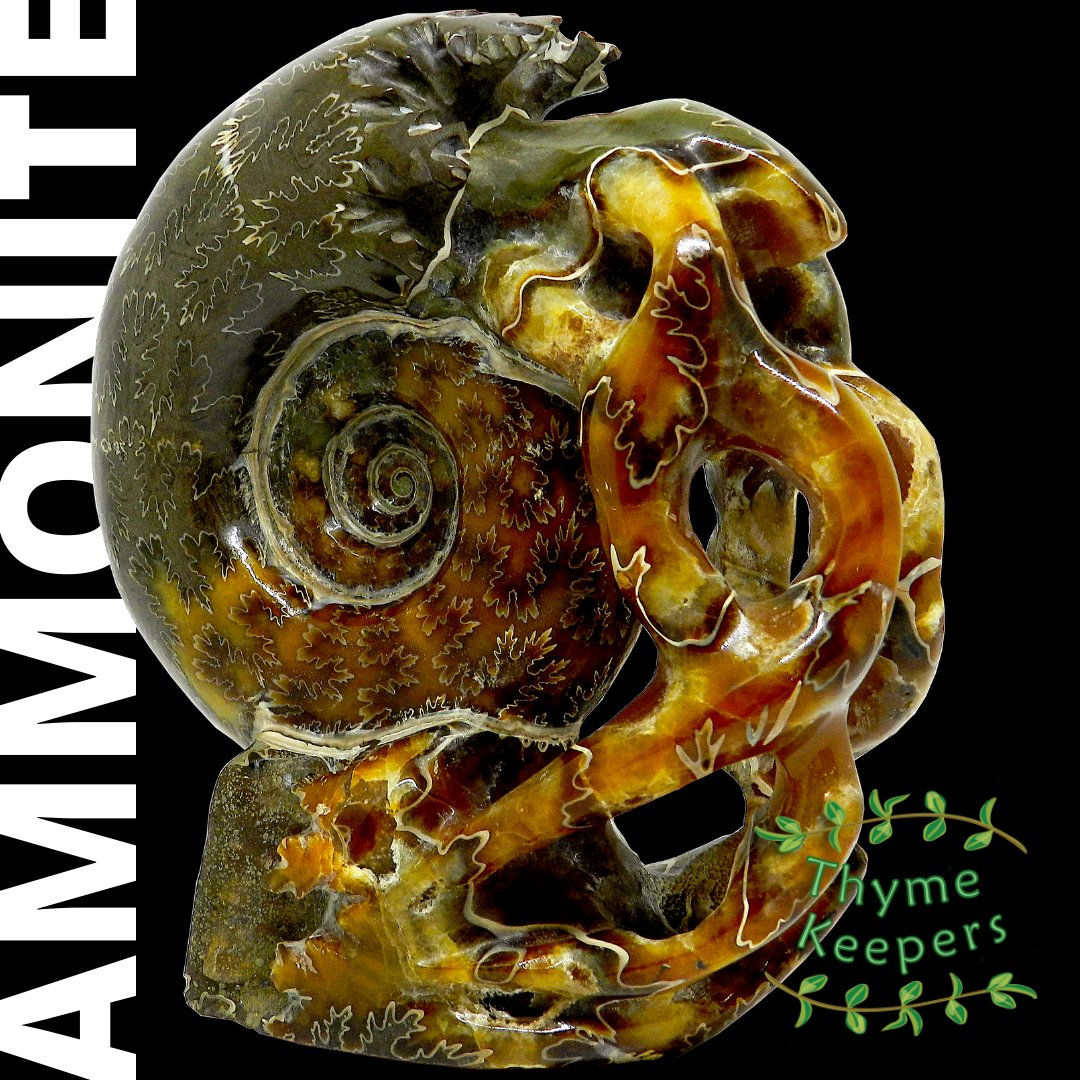 A fossilised shell turned to stone over millions of years and carved to create this beautiful Ammonite Carving. 13cms tall, weighing 800gm and can be brought now for only £175 by following this link : https://buff.ly/32EE4k3   #fossil #fossilwatch #fossiloriginal #fossiladdict pic.twitter.com/nhab6Af6Uq