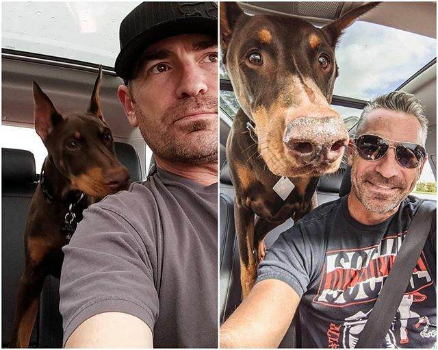 #transformationtuesday.. My ride or die from day one  . #myrubes #copilot #alwaysbymyside #thatfacethough #rubydooby_do #alldoberman #doberman #dudeswithdogs #dobermann #dobiesofinstagram #dobielove  #topdogphoto #daddyofdogs #dobermanInstagram #dog… https://ift.tt/32Kx70E pic.twitter.com/WDzO9p20la