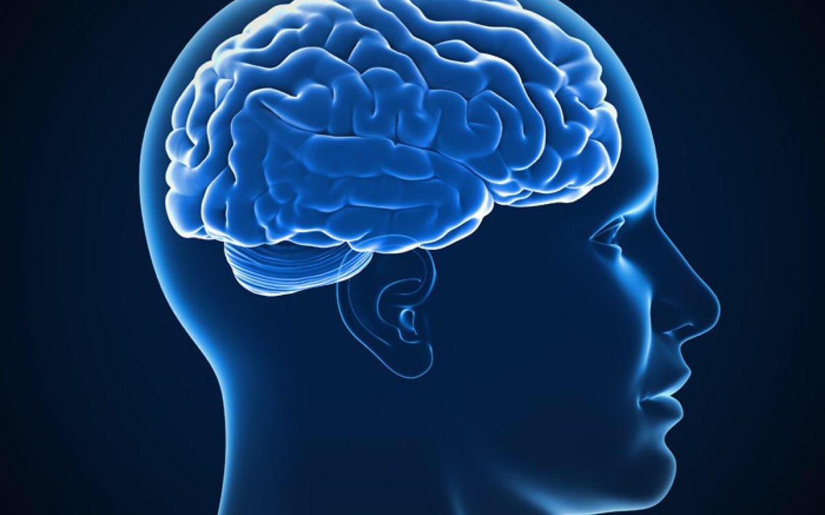 Alcohol Hersenen
