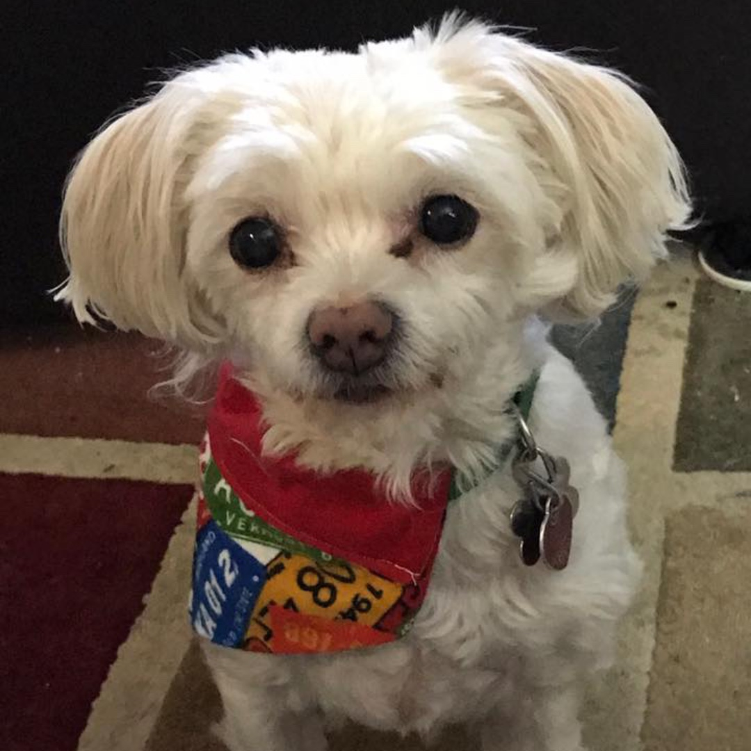 """Mr. Butters says, """"Don't Forget!""""!  #PCSPCA #Pet #Pantry is open this Saturday, March 7 from 1:00 - 4:00 p.m.  @passaic_county #pawsitivity #dogs #cars https://t.co/ocNrBLm0yf"""