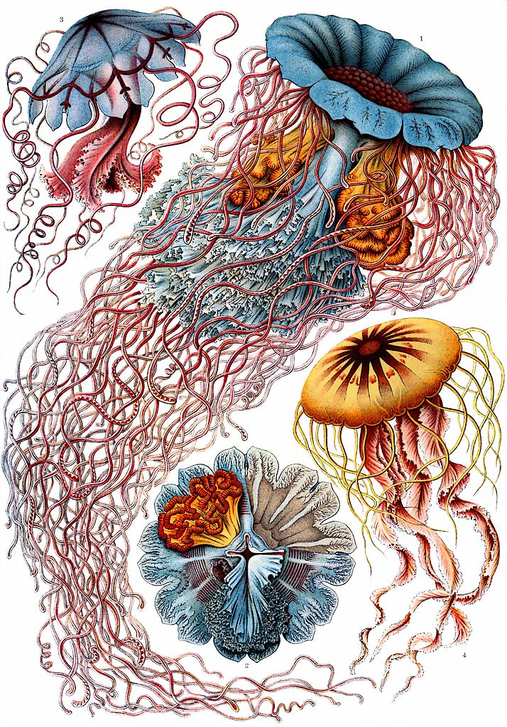 Ernst Heinrich Haeckel's Sublime #Drawings of #Flora and #Fauna: The Beautiful #Scientific Drawings That Influenced Europe's #ArtNouveau Movement (1889) https://bit.ly/39pawcy  .@openculture pic.twitter.com/dCz2HAKwF7