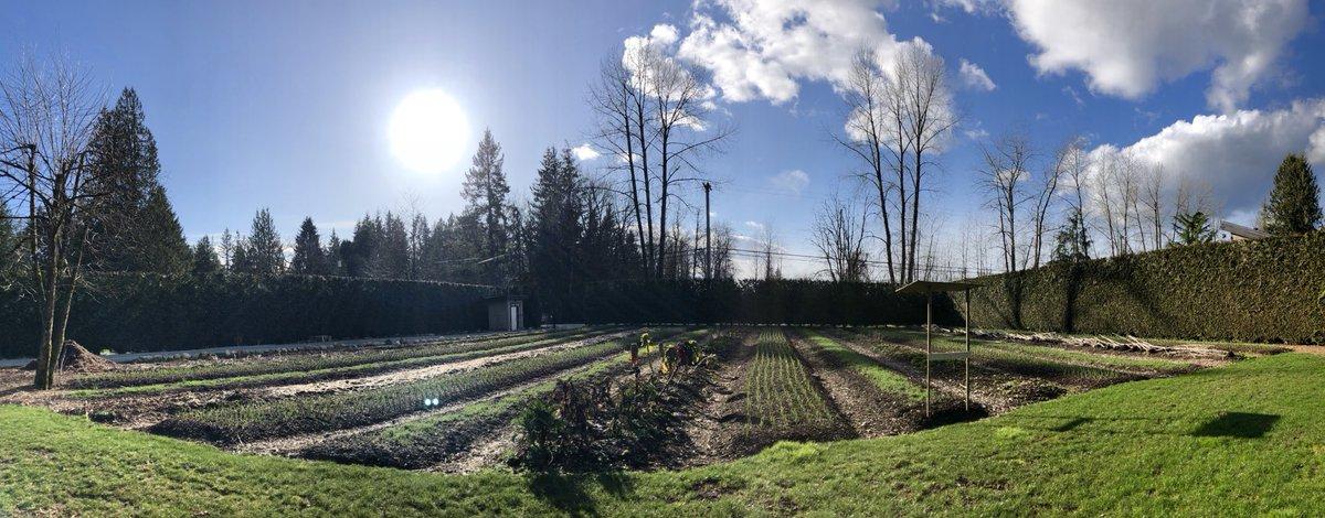 I've sure missed the #sun.  Let the #garden clean up begin!  #smallfarm #farmdirect #local natural #mapleridge #farm #spring #bcfarmfresh https://t.co/rYQQWUfZYg
