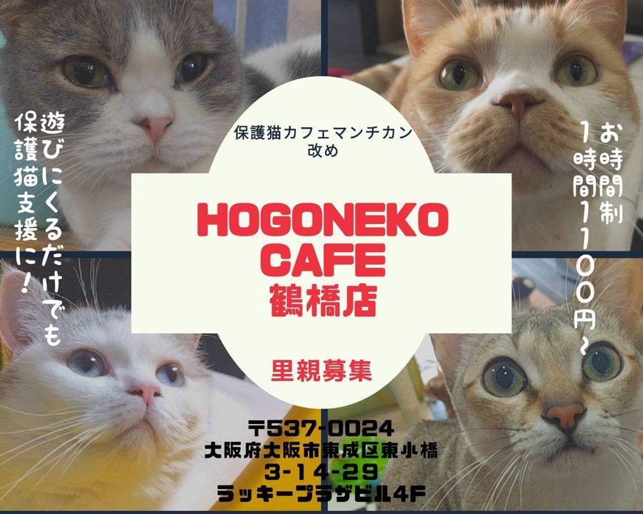 猫 マンチカン 保護 マンチカン ミヌエット